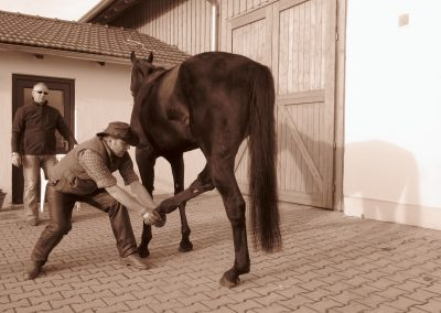 Pferde-Osteopathie Praxis Spreckelsen