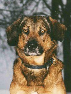 Osteopathie für Hunde Praxis Spreckelsen